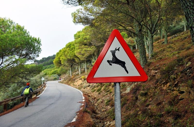 Randonneur marchant le long d'une route de montagne, signe des animaux sauvages image libre de droits