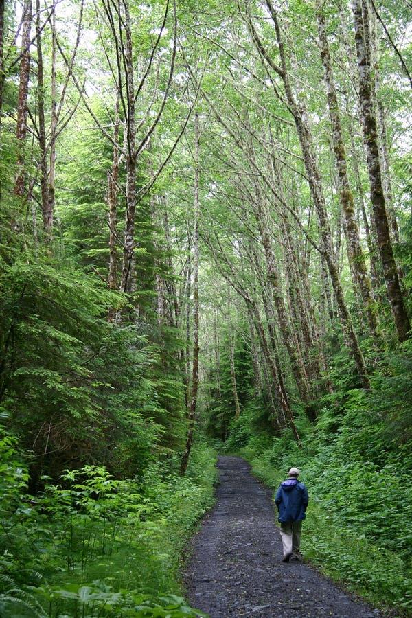 Randonneur marchant sur le journal de forêt image stock