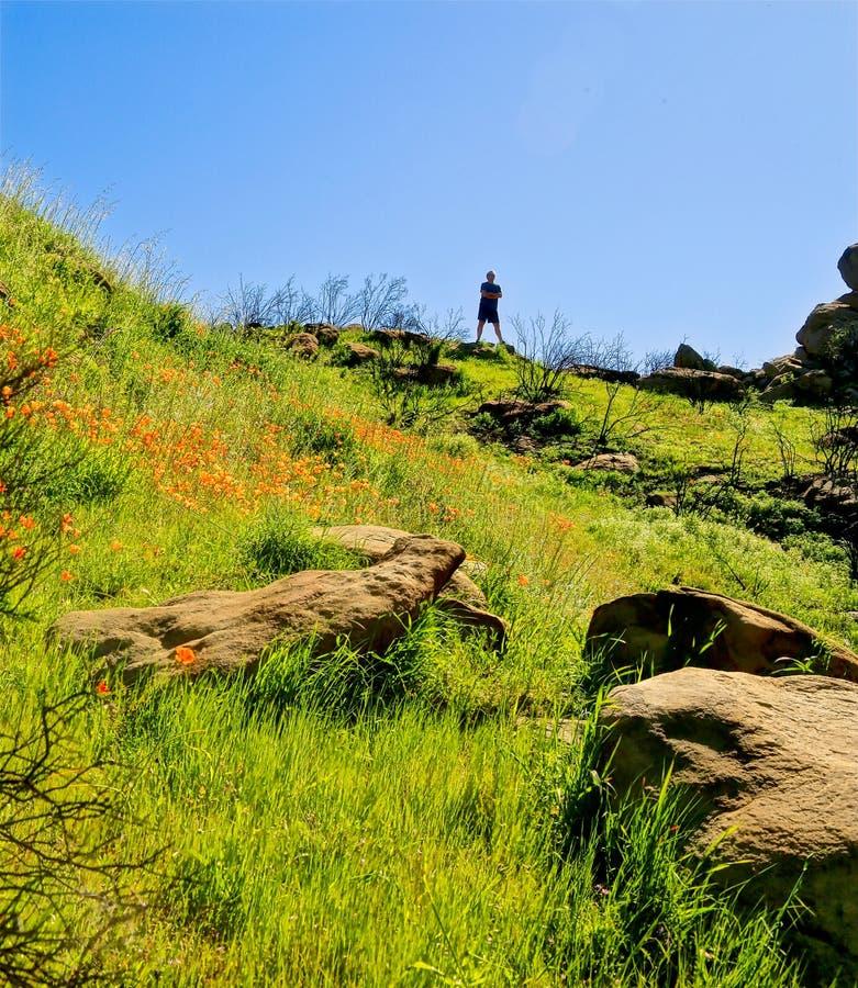 Randonneur orange de montagne de wildflowers de la Californie Polly photographie stock