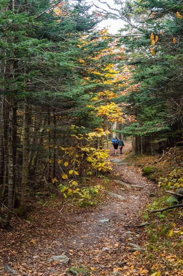 Randonneurs sur Rocky Path Through étroit une forêt photos libres de droits
