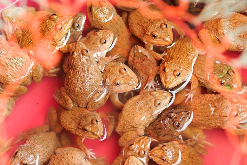 Rane da vendere - Tailandia immagine stock