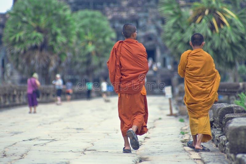Rane pescarici a Angkor Wat immagine stock