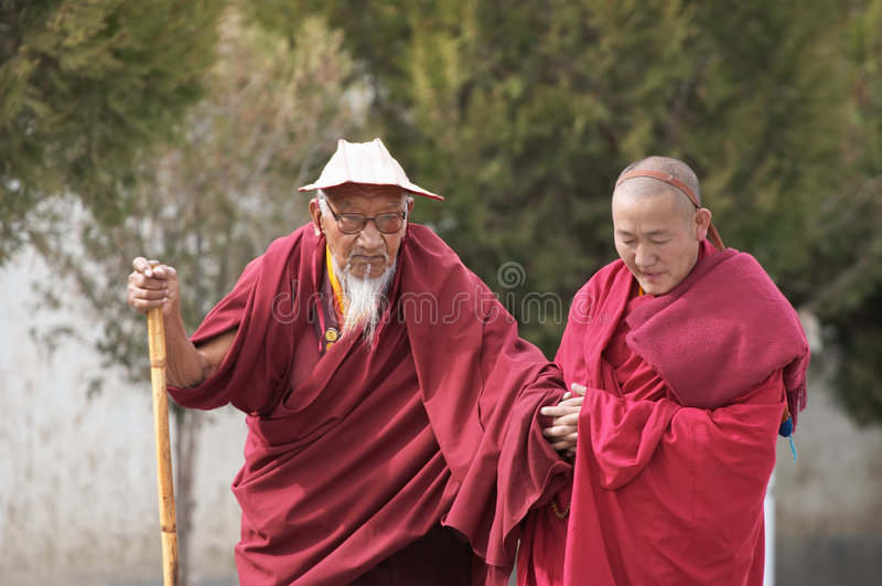 Rane pescarici tibetane fotografia stock libera da diritti