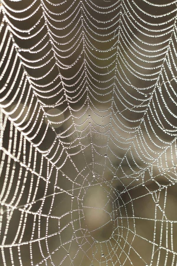 Ranek dews na spiderweb w ranku zdjęcia stock