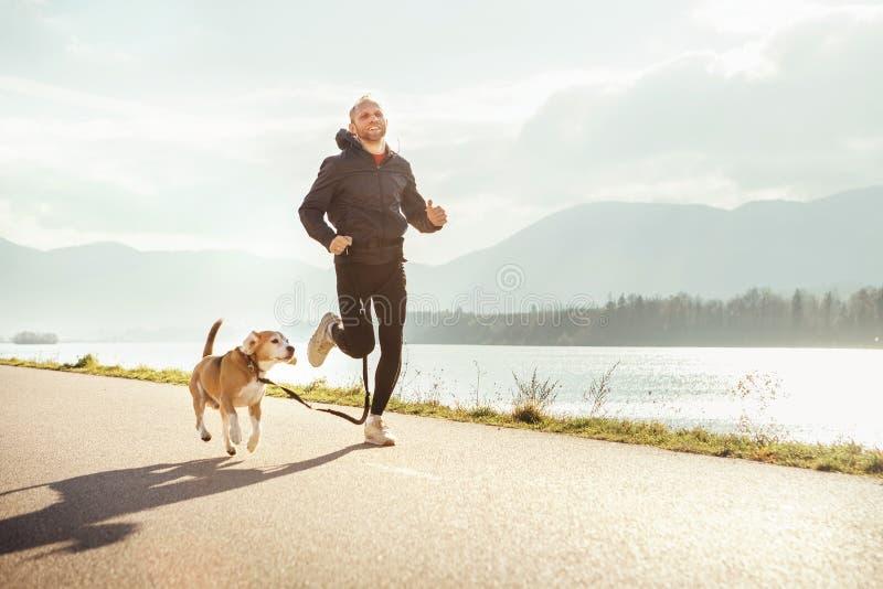 Ranek jogging z zwierzęciem domowym: mężczyzna biega wraz z jego beagle psem obrazy stock