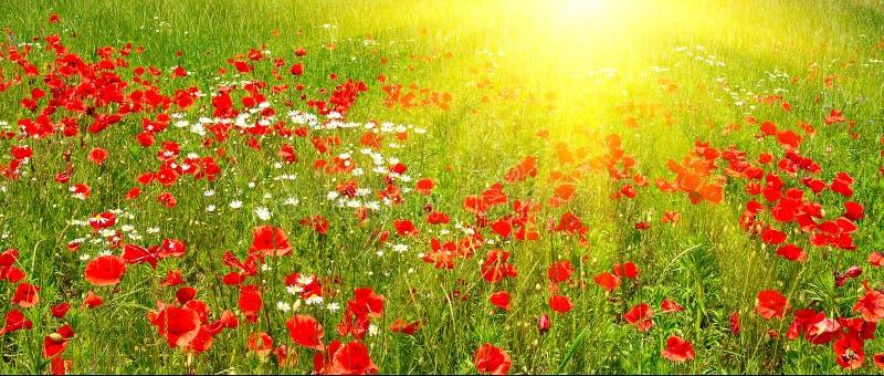 ranek kolorowy wczesny łąkowy lato obrazy stock