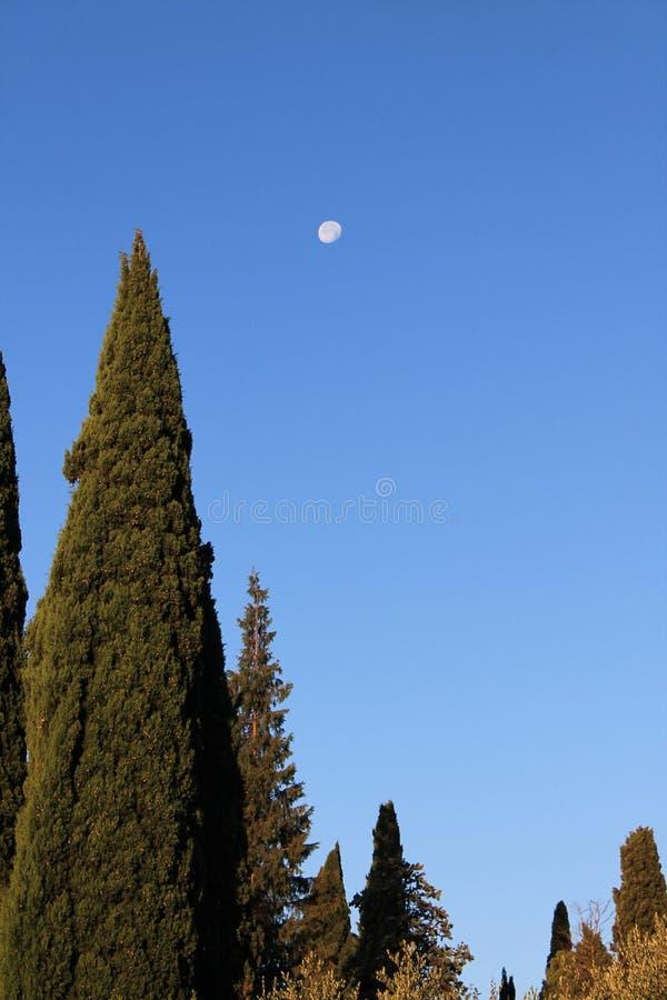 Ranek księżyc w niebieskim niebie przeciw tłu wysocy cyprysy zdjęcia stock