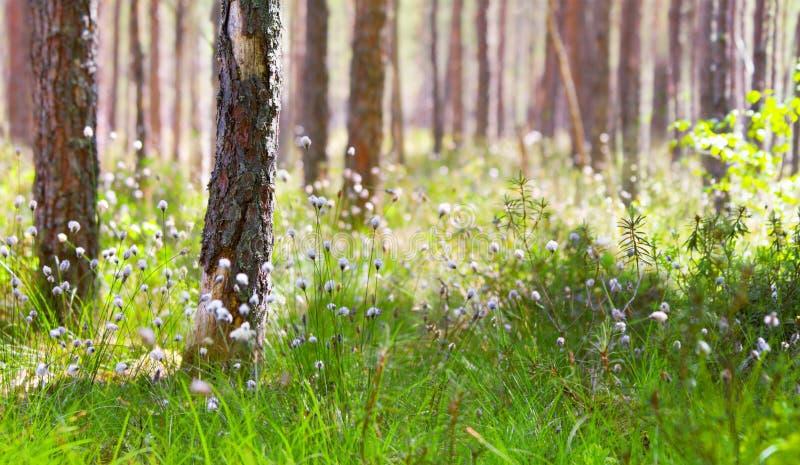 ranek lasowa wiosna fotografia stock
