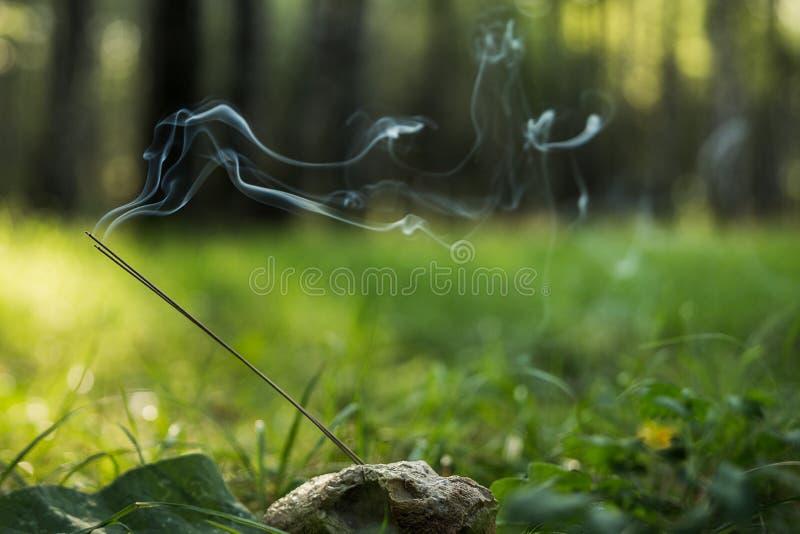 Ranek lekka medytacja w naturze zdjęcia stock