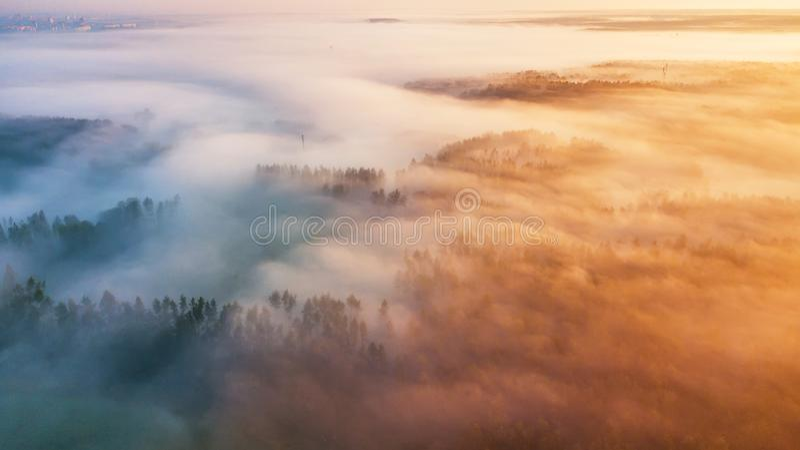 Ranek mgła nad lasem Lato natury krajobrazu anteny panorama zdjęcie stock