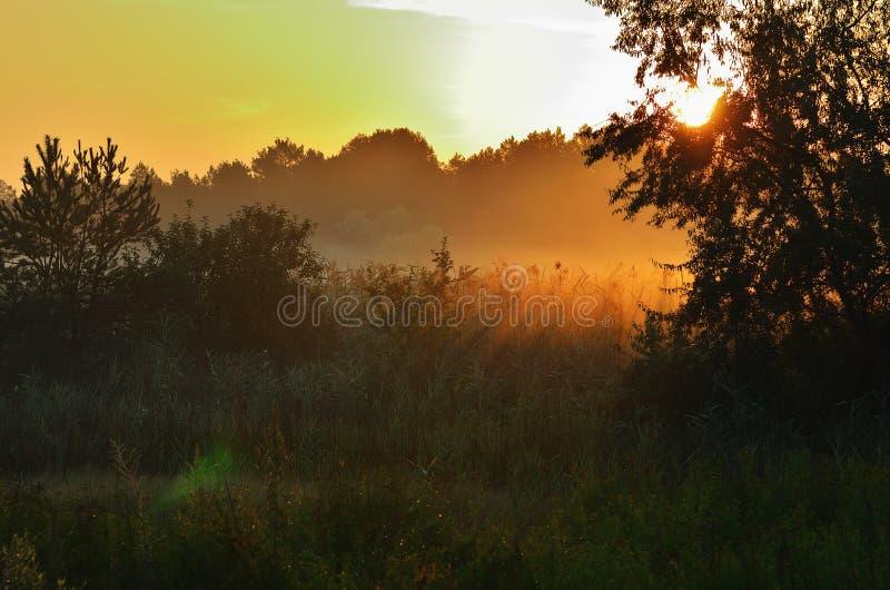 Ranek mgła po środku drzew i stepu obrazy royalty free