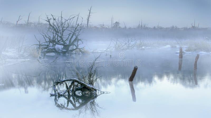 Ranek mgła w bagnach zdjęcia stock