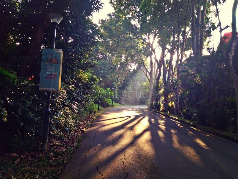 Ranek mgła w tropikalnym tropikalnym lesie deszczowym zdjęcia royalty free