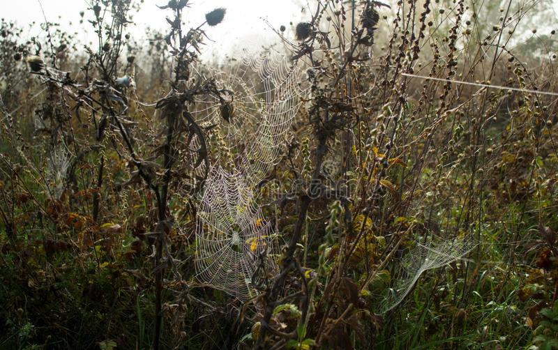 Ranek pajęczyny i mgła zdjęcia royalty free