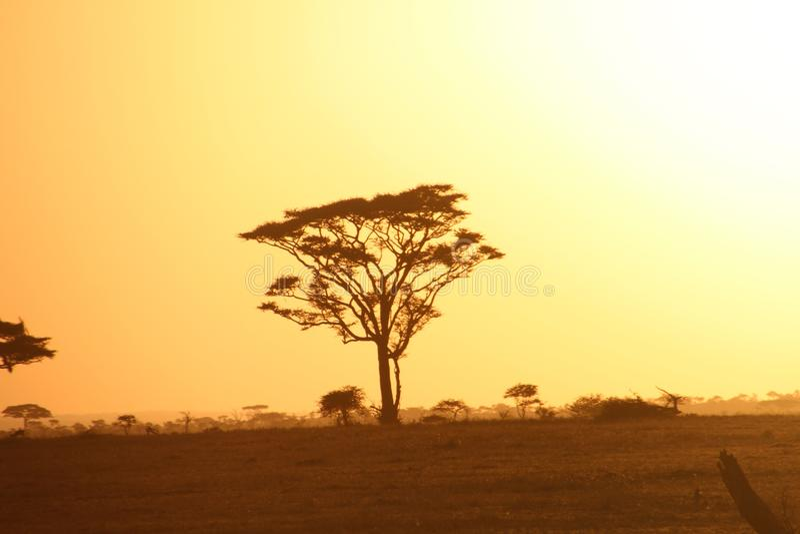Ranek przy savana fotografia stock