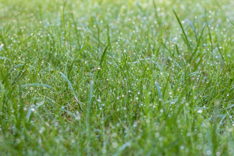 Ranek rosa na świeżym grren trawy w ogródzie fotografia stock