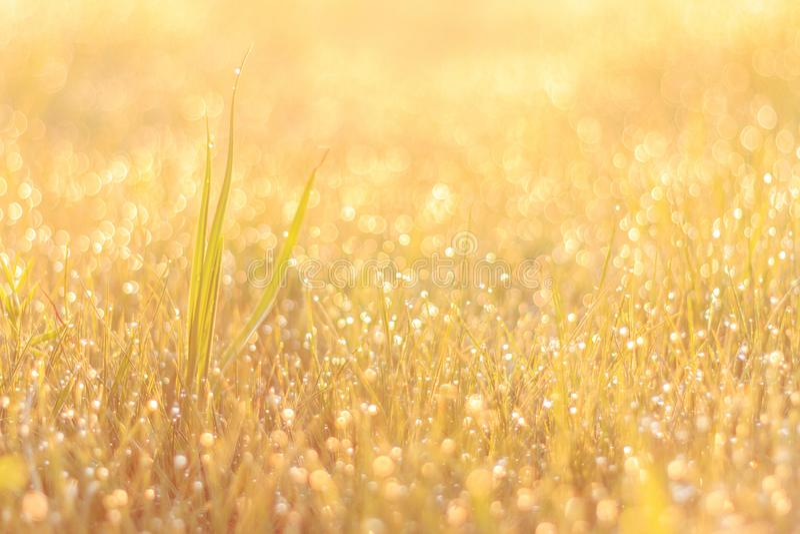Ranek rosa na trawie i pięknym bokeh zdjęcie stock
