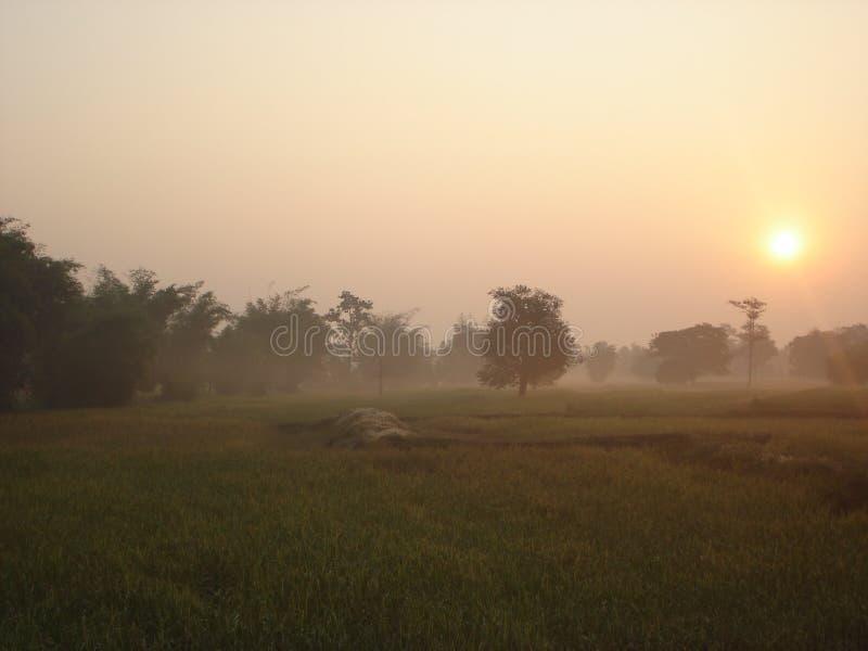Ranek w mgle zdjęcie stock