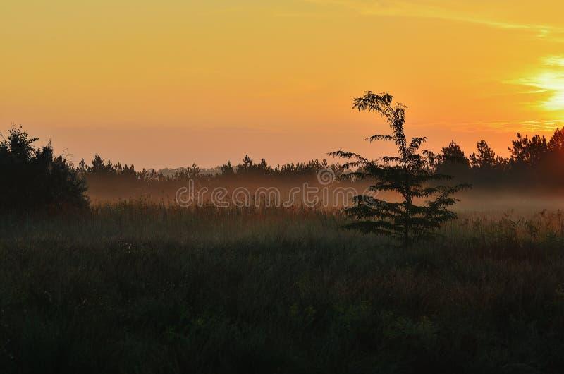 Ranek w stepie, czerwony niebo, wschód słońca obrazy stock