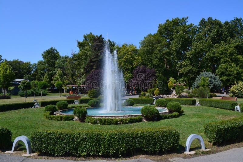 Ranek w zielonym parku zdjęcia royalty free