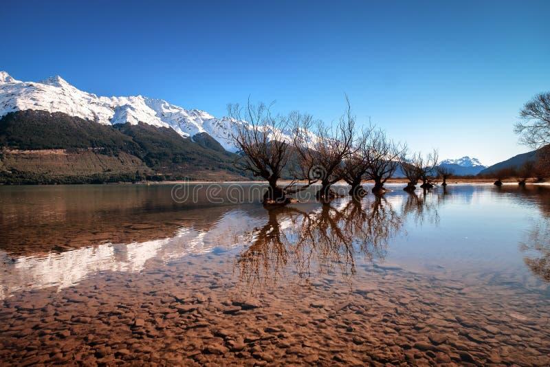 Rangée célèbre de saule dans Glenorchy, île du sud, Nouvelle-Zélande image libre de droits