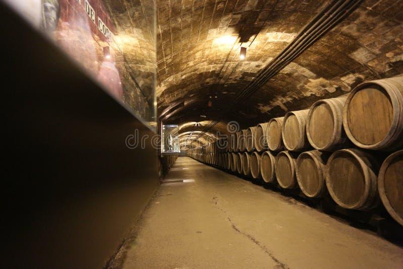 Rangée de vieux barils pour le vin vieillissant dans la cave image libre de droits