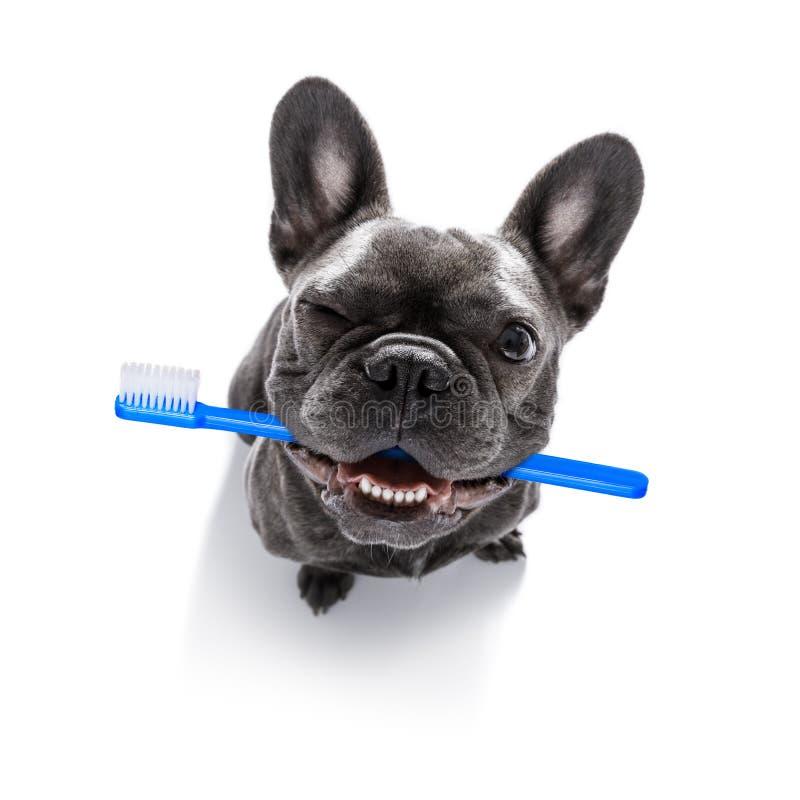 Rangée dentaire de brosse à dents des chiens image libre de droits