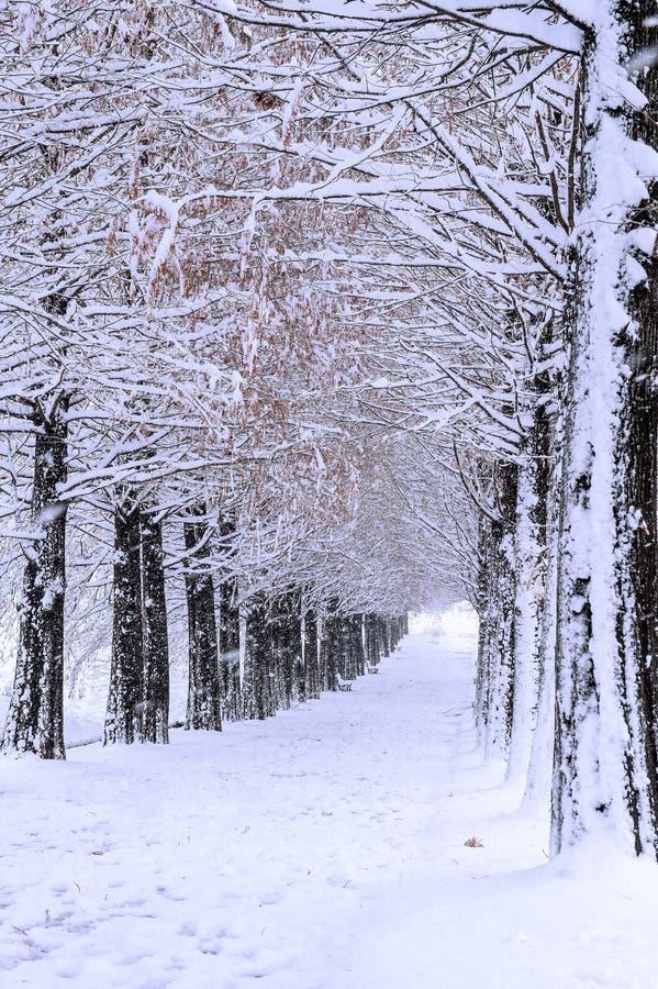 Rangée des arbres en hiver photo stock