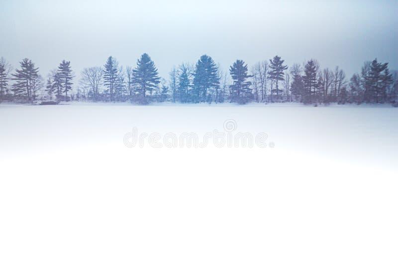 Rangée des arbres le long de la route dans la tempête de neige photos stock