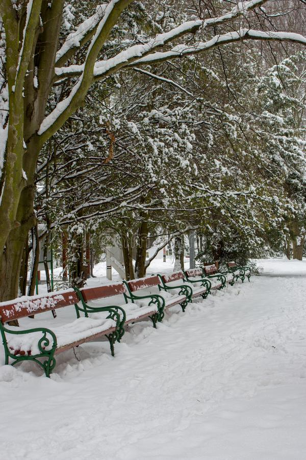Rangée des bancs couverts de neige sous des arbres Parc neigeux d'hiver avec des bancs Allée congelée en parc Bancs dans la neige photo libre de droits