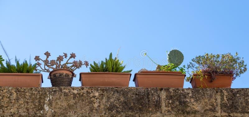 Rangée des boîtes de balcon plantées avec les succulents et le cactus images libres de droits