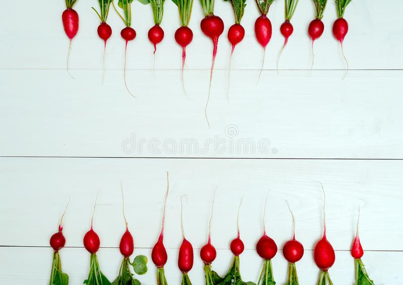 Rangée des radis rouges organiques frais avec des dessus sur le fond en bois blanc Vue sup?rieure Fond v?g?tal L'espace libre pou photos libres de droits