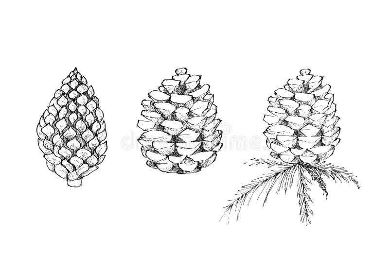 Rangée tirée par la main de cône de pin sur le blanc illustration de vecteur
