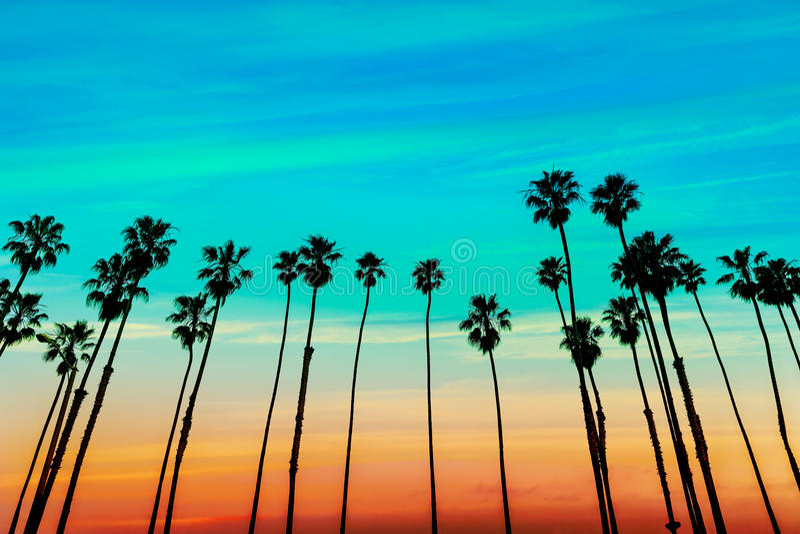 Rangées de palmier de coucher du soleil de la Californie en Santa Barbara image libre de droits