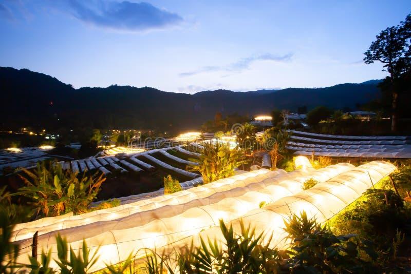 Rangées de serre chaude dans la vallée au crépuscule avec des lumières sur l'intérieur images stock