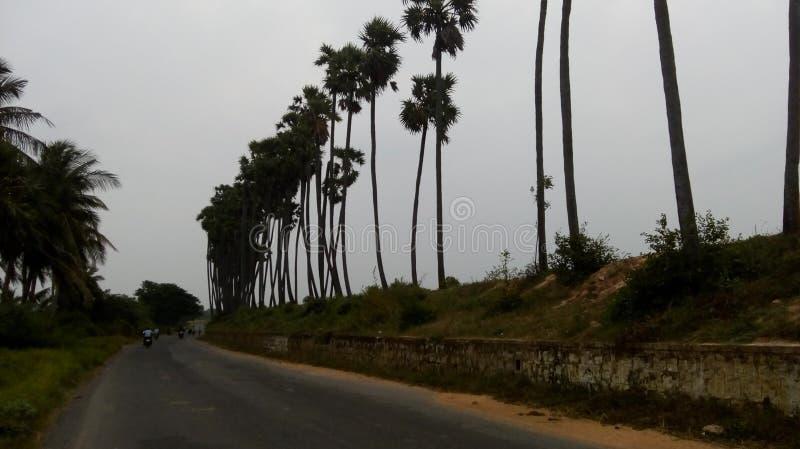 Rangées des arbres grands photo stock