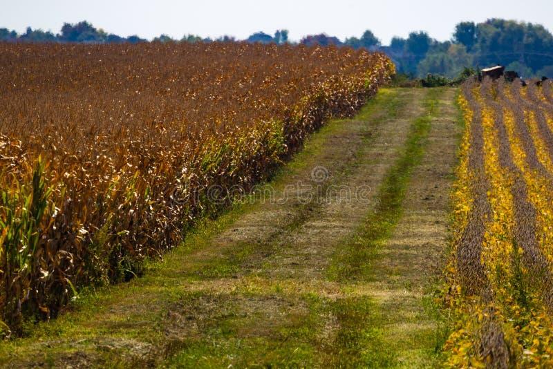 Rangées des pistes pour véhicules de soja, de maïs et images libres de droits