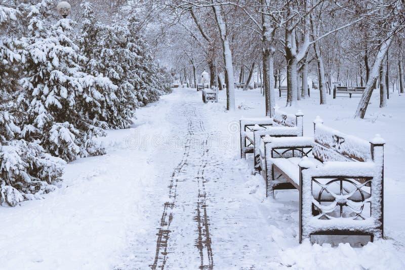 Rangées des sapins en hiver neigeux photo stock