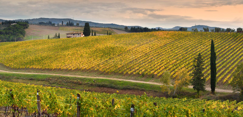 Rangées des vignobles jaunes au coucher du soleil dans la région de chianti près de Florence pendant la saison colorée d'automne  photo libre de droits