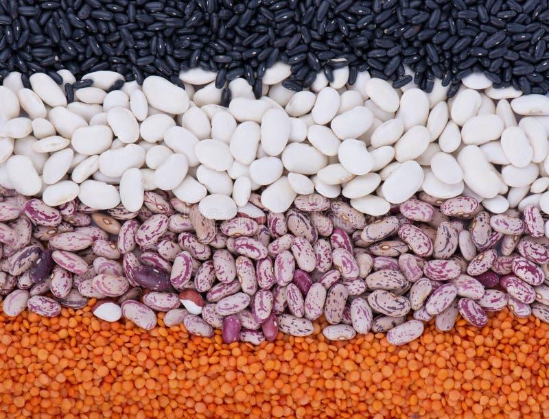 Rangées rayées colorées des lentilles, haricots, pois, légumineuses photo stock