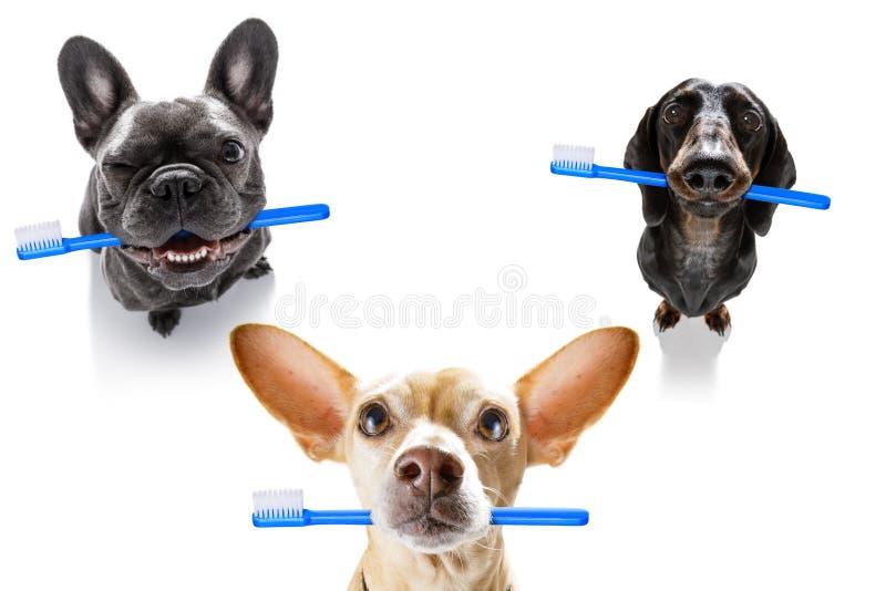 Rang?e dentaire de brosse ? dents des chiens image libre de droits