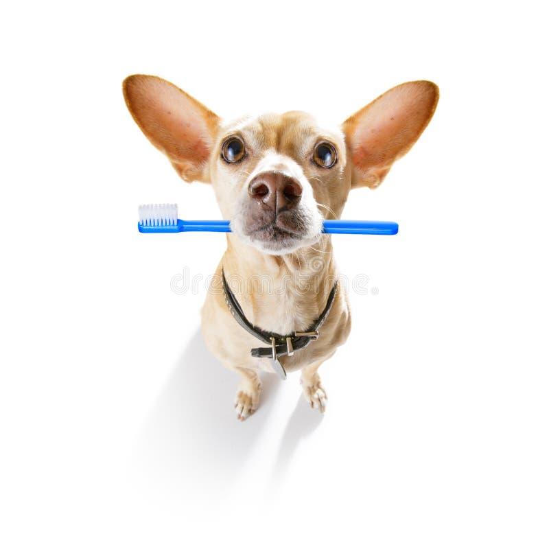 Rang?e dentaire de brosse ? dents des chiens images stock