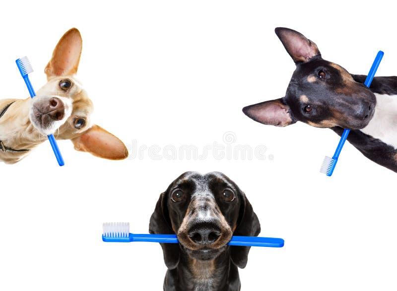 Rang?e dentaire de brosse ? dents des chiens photos libres de droits