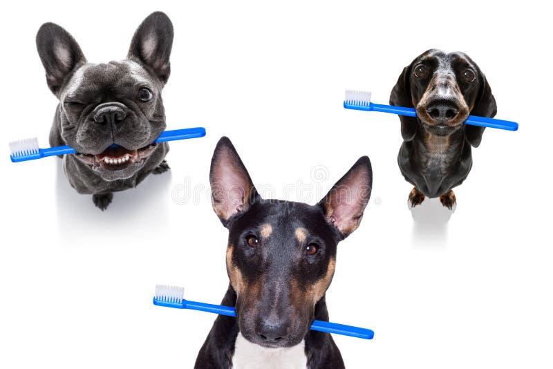 Rang?e dentaire de brosse ? dents des chiens photographie stock libre de droits