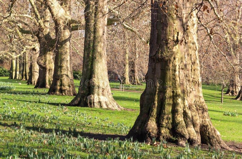 Rang?e des arbres en parc photographie stock libre de droits