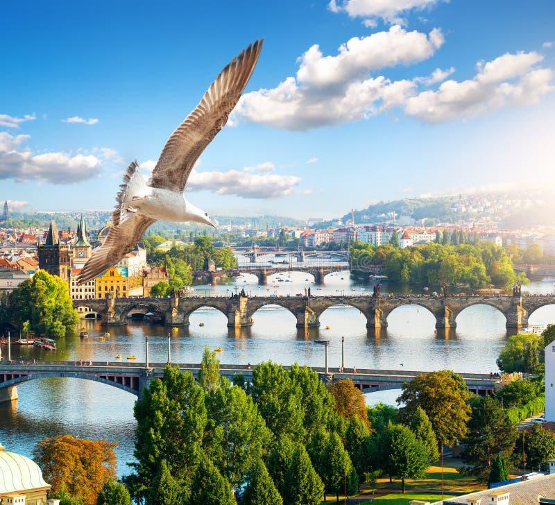 Rang?e des ponts ? Prague photo stock