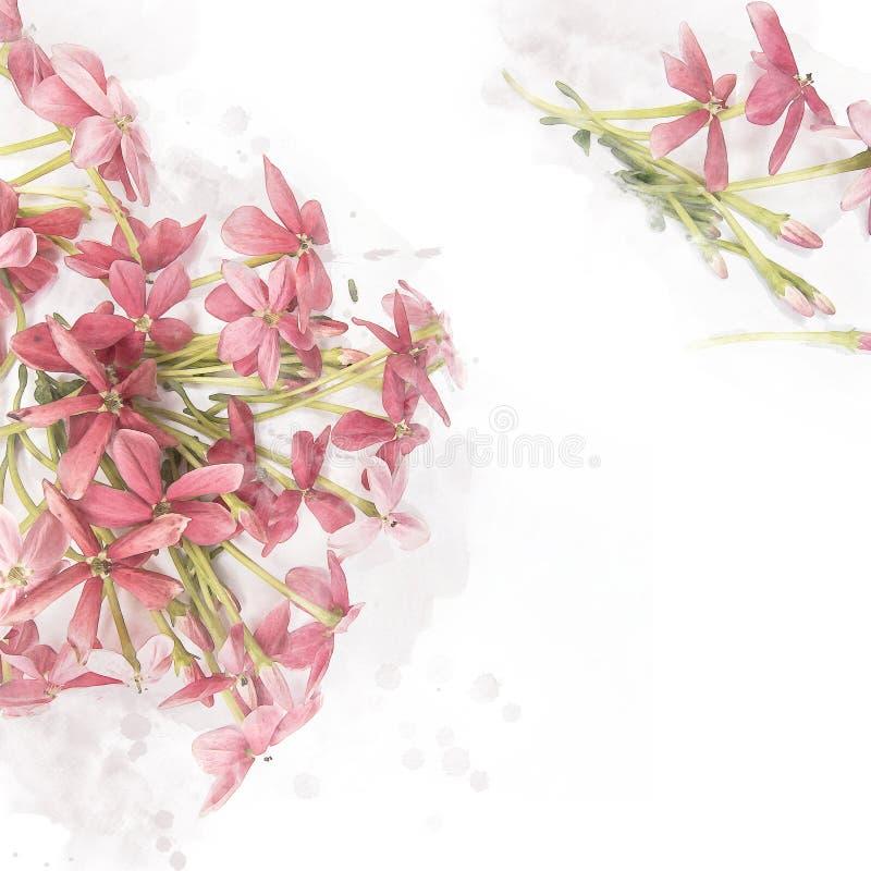 Rangun-Kriechpflanze Blume der Blüte rosa vektor abbildung