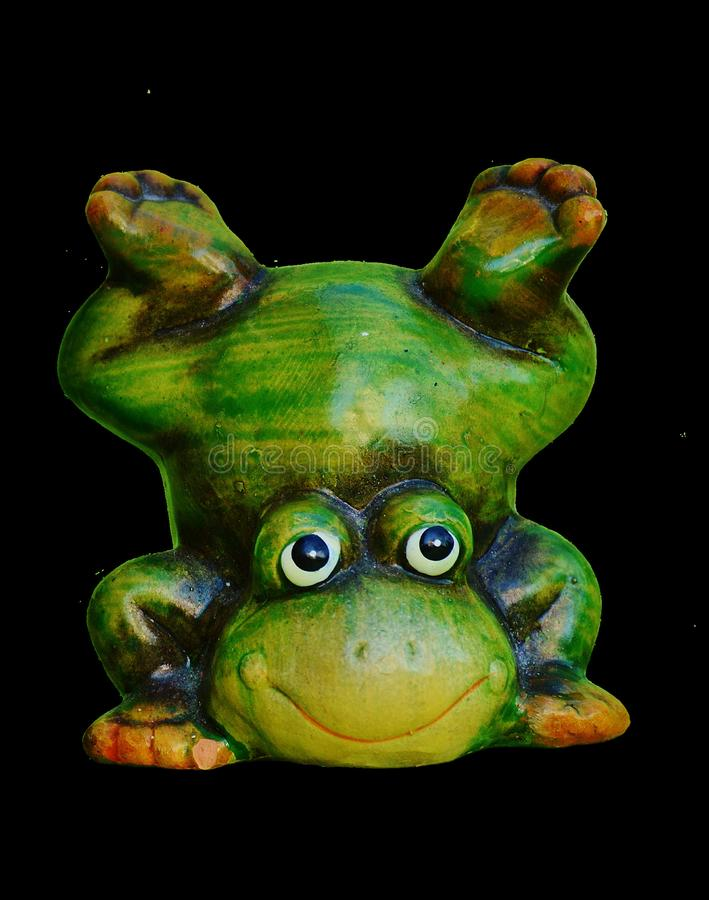 Ranidae, Amphibian, Frog, Tree Frog royalty free stock photography