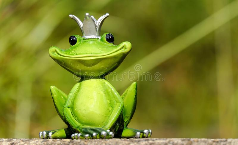 Ranidae, Frog, Amphibian, Tree Frog royalty free stock photography
