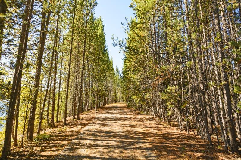 Ranków cienie na drzewo Prążkowanej Wiejskiej drodze i światło obrazy royalty free